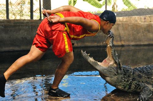 samui crocodile